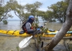 Entering the mangroves
