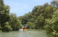 Disappearing into the mangroves