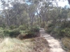 The track to Dr Roberts Waterhole