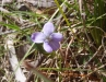 And violets